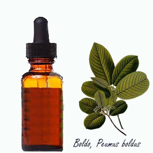 Boldo Leaf Extract