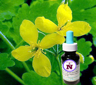 Greater celandine extract