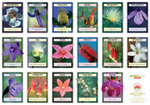 Australian Bush Flower Essences Wall Charts, Set of 4