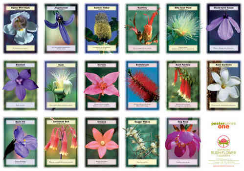 Australian Bush Flower Essences Wall Charts, Set of 4