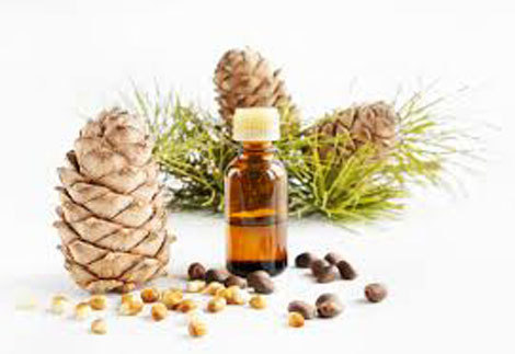 Pine Essential Oil 25ml