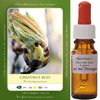 Chestnut Bud Essence 50 ml
