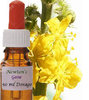 Flower Essence Gorse 50 ml