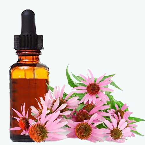 Echinacea angustifolia root extract 1:1