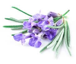 Oils_French_Lavender